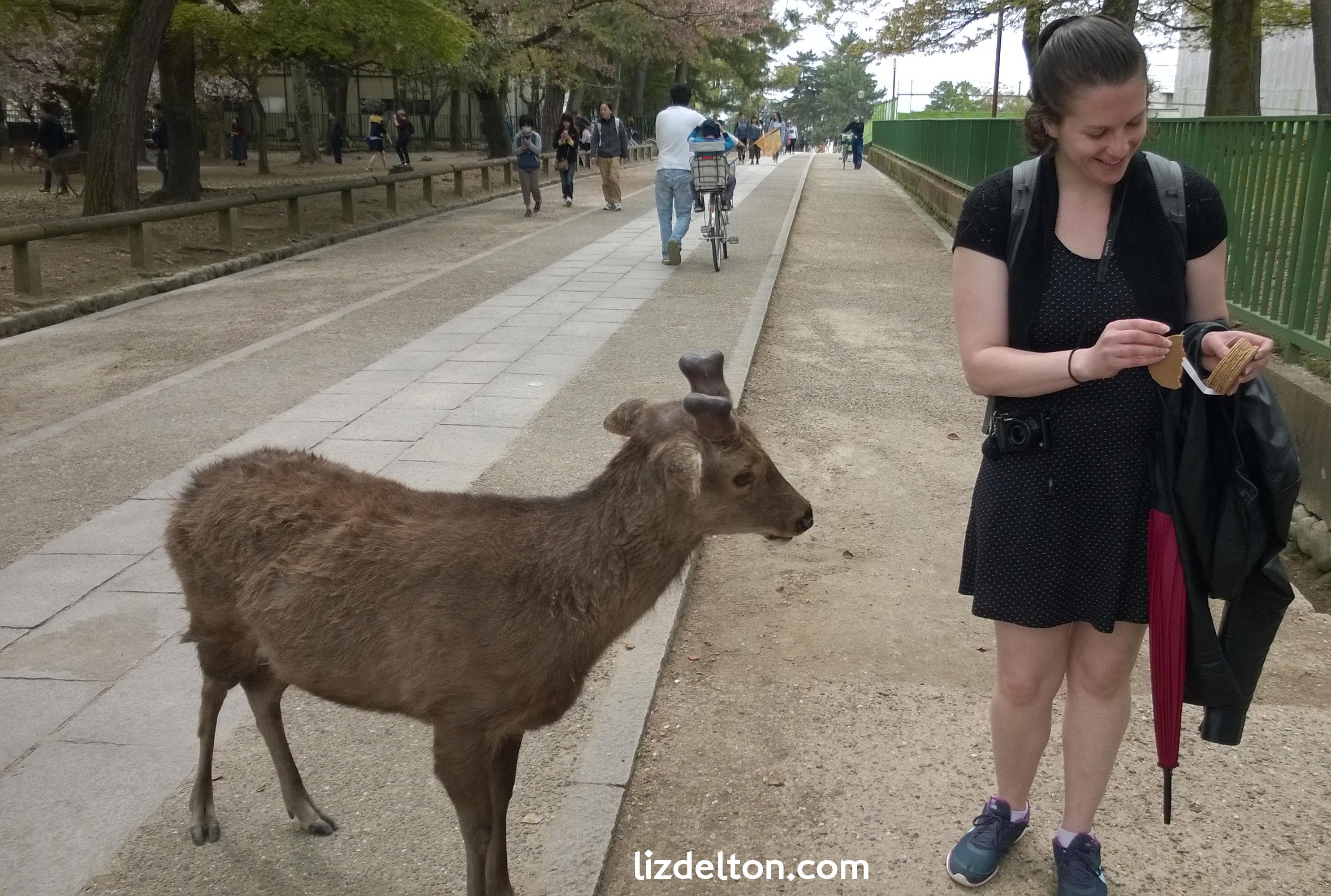 The deer in Nara Park speak the language of food.